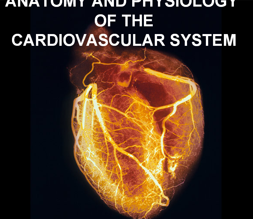 ANATOMY AND PHYSIOLOGY – Nursing Powerpoint Presentations
