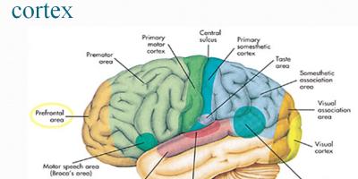 NEURO-PSYCHIATRY-OUR-COMMITTMENT-PSYCHIATRIC-NURSING-ppt