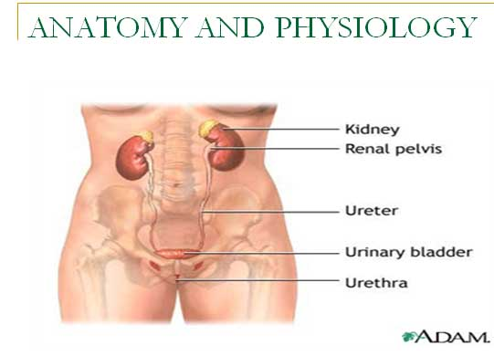 bladder-cancer--medical-surgical-nursing-ppt
