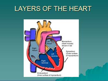 inflamatory-condition-of-heart-medical-surgical-nursing-ppt